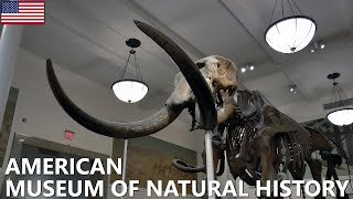 AMERICAN MUSEUM OF NATURAL HISTORY │ NEW YORK.  A fantastic experience for the whole family.