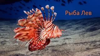 Морские обитатели для детей на русском и английском