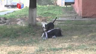В Мариуполе нетрезвая женщина взяла в «плен» свою собаку