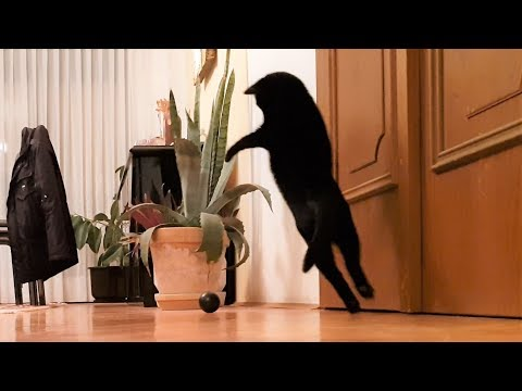 This Cat Will Melt Your Heart With Playfulness