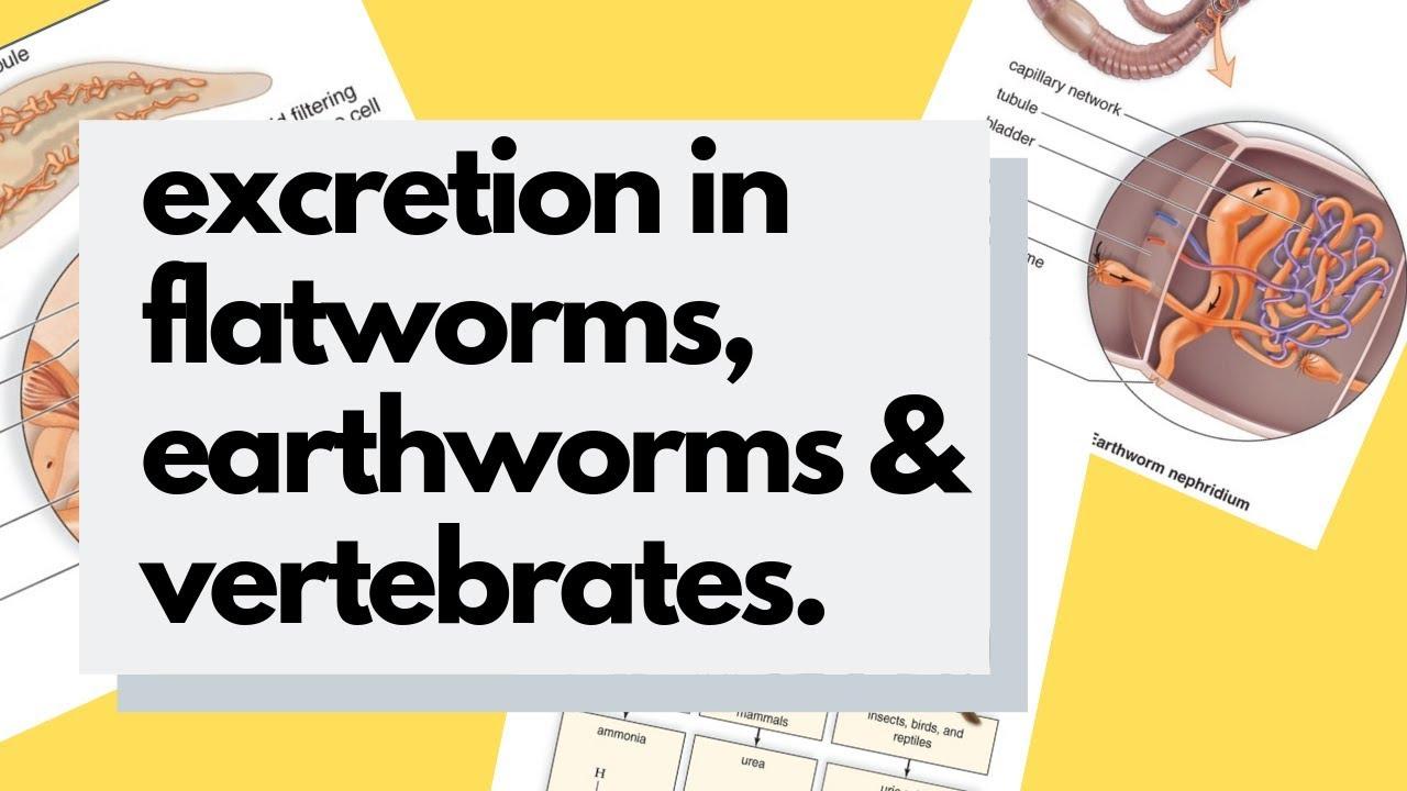 Fonálféreg annelida platyhelminthes, Platyhelminthes nematoda és annelida