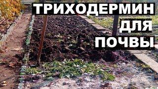 Обработка почвы от болезней.  Применение триходермина на огороде