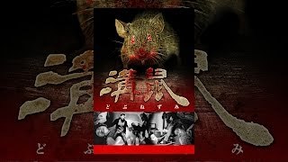 映像プロダクションを経営する赤迫慎吾(森本亮治)。ある現場で、事務所に騙されAV出演させられたアイドル奈々(八木まりな)と出会う。...
