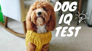 How Smart is a Cavapoo? | DOG IQ TEST