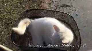 Нашли белого кота в лесу