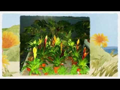 Vivero y ceramicas lagos vivero de plantas y rboles en for Viveros de arboles en madrid