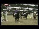 Hillside Cavalier - Matthew Foster 1.30
