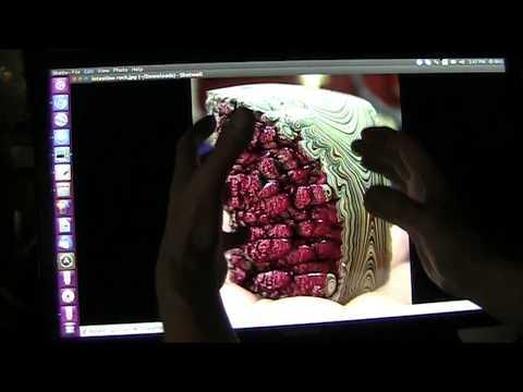 Mudfossil Intestines and