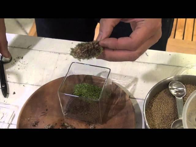 苔っ景(苔で作る風景)の作り方・日常の管理方法