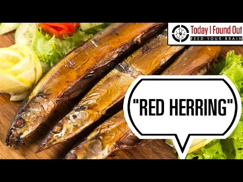 How the Phrase Red Herring Came to Mean Something That is Misleading