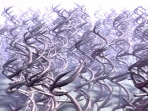 Pantera - Planet Caravan (Video)