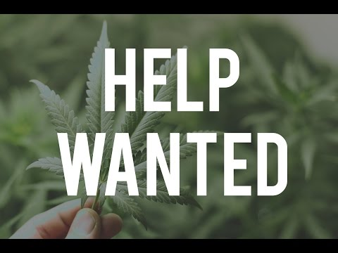 Looking for a Cannabis Job? These hot startups are hiring NOW