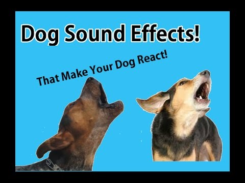 Dog Barking & Howling Sound Effects