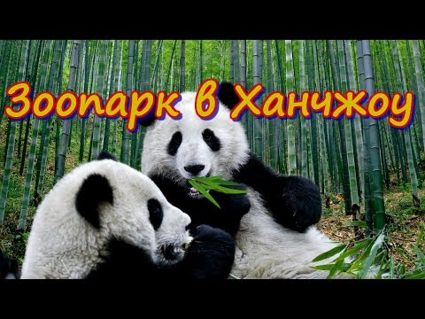 Зоопарк в Ханчжоу.  Китай Zoo in Hangzhou. China