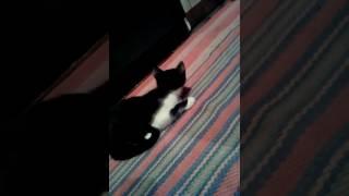 Мой кот.Кашляет.