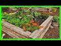 13個「讓你的家園秒變成園藝天堂」的原創diy栽種點子! 一望無際的蔬菜園不只是有吃不完的新鮮蔬菜,背後還伴隨著農夫們的腰酸背痛與膝蓋疼痛...
