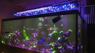 180G REEF SALTWATER AQUARIUM | AQUARIUM EQUIPMENT AQUAMAXX GEAR  | NEW CORAL FRAGS