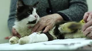 .Пострадавшему бездомному коту Пушку оказали медицинскую помощь.