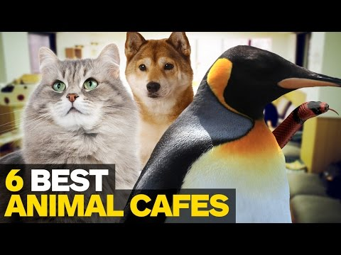 6 Best Animal Cafes in Tokyo