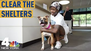 Watch Shelter Pets' Adorable Reactions After Being Adopted | Clear the Shelters