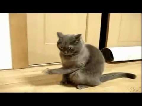 все видео про кошек