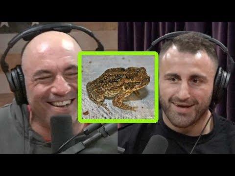 Joe Rogan Freaks Out About Australia's Cane Toad Problem