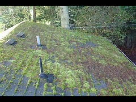How To Remove Moss From A Roof Part 3 The Results Youtube