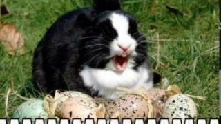 Fat bugs bunny