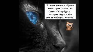 Кошки в дар Санкт-Петербург и ПО.