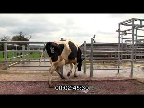 Operation of the milking robot at Moorepark