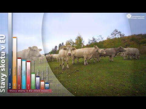 Mýty a pověry o zemědělství 4 Hovězí maso 2020