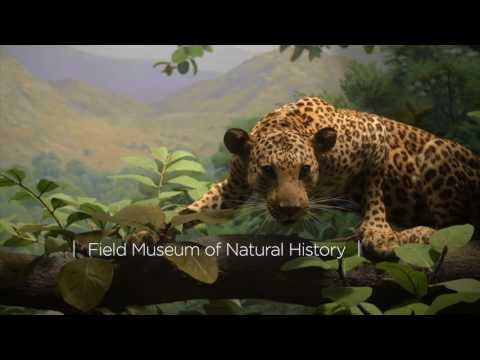 Chicago Museums: Visit the Art Institute of Chicago, Field Museum and Museum of Science and Industry