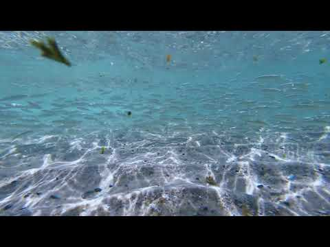 Exploring The Intertidal Zone