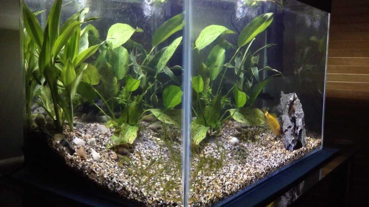 10 Gallon fish tank / Aquarium with live plants - YouTube
