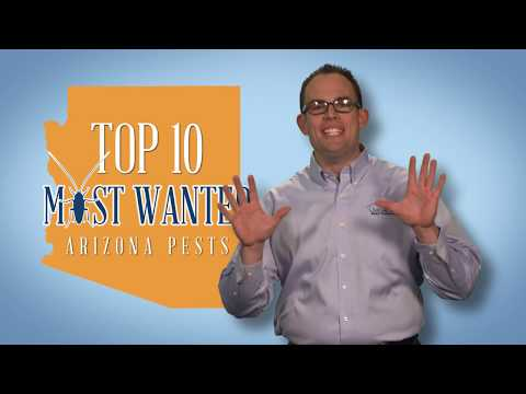 Arizona's Top 10 Pests   Bluesky Pest Control