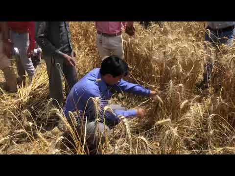 DM Haridwar, Deepak Rawat with farmers in the field.
