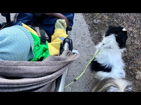 Update Ricosta (kun iso koira puri mun koiraa osa 3)