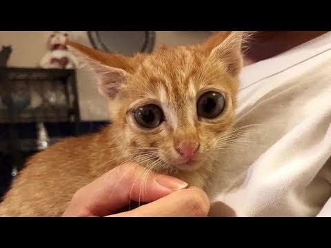 Найдя парке маленького котенка за 8 ноября