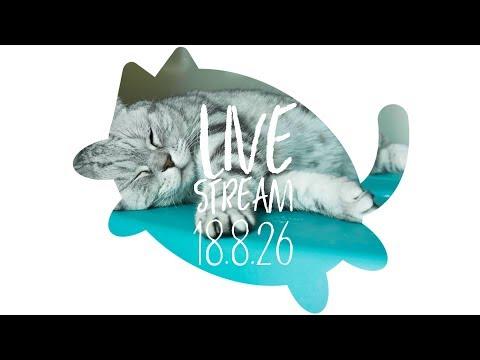 [생방송] 수리노을 고양이 눈높이 놀이법 공개 2018년8월 26일 【SURI&NOEL】