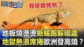「地板燒燙燙」蜥蜴猛跑躲暗處 地獄熱浪席捲歐洲「發高燒」!? 關鍵時刻20190628-5 馬西屏