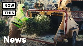 Recycling Christmas Trees: What Happens To Trees After Christmas? | NowThis