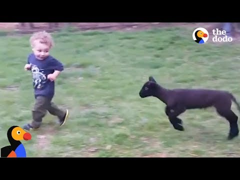 Boy And Lamb are BEST Friends at Farm Sanctuary | The Dodo