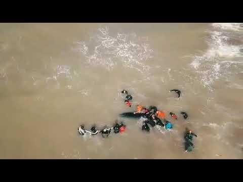 Orca liberada en La Caleta