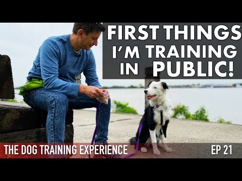 The First Things Im Training My Puppy in Public!