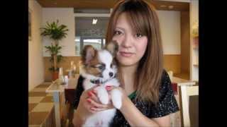 我が家の愛犬 4パピヨン ♥.•´♥.•´♥. うちのワンコの成長記録。 ♥.•´♥.•...