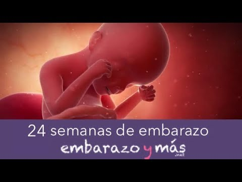 4ea4072a7 26 semanas de embarazo - Sexto mes - EMBARAZOYMAS - Action.News ABC ...