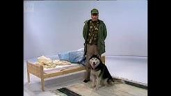 Velipuolikuu - Palveleva Koiramme