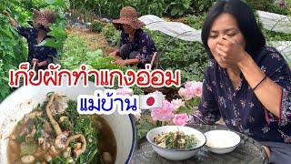 แกงอ่อมจากผักสดๆในสวน ปลูกผักไทยกินเองที่คาชิม่าญี่ปุ่น
