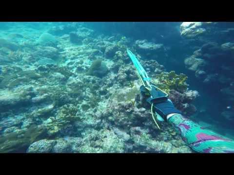 San Blas Islands spearfishing, more sharks..