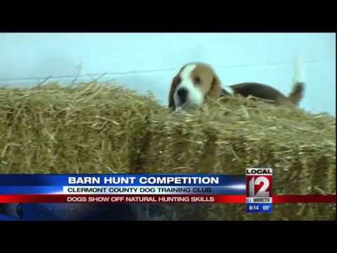 Dogs Compete In Barn Hunting Competition Youtube